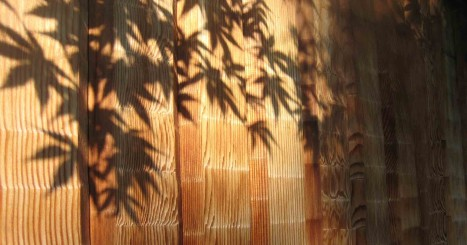 2009 07 11 momiji shadows 150