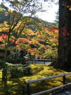 Kinkakuji. The Golden Pavilion grounds, Kyoto