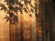 momiji shadows, Kyoto