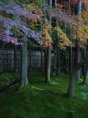 moss and maples, Kyoto